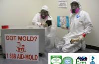 mold redediation