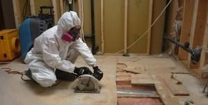 Water and Mold Damage Restoration On Floorboards